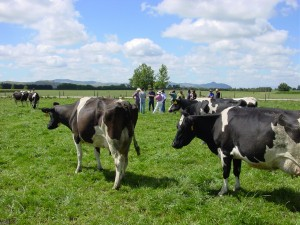 Dairy farm consultancy - advising on dairy cow and farm management