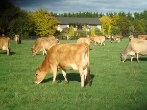 Pasture-based dairy farm systems