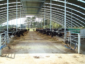 Contact Dairy Production Systems about cow nutrition